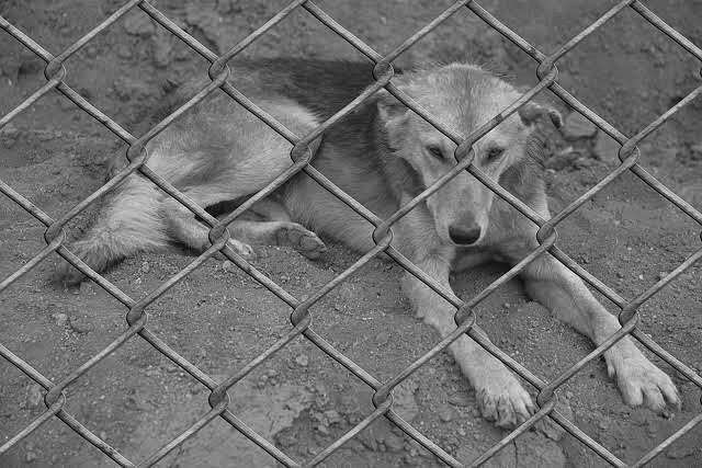 収容される犬の写真