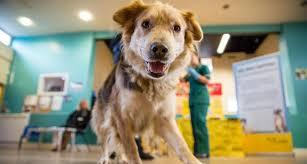 動物病院の写真