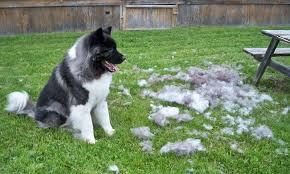 犬ブラッシングの写真
